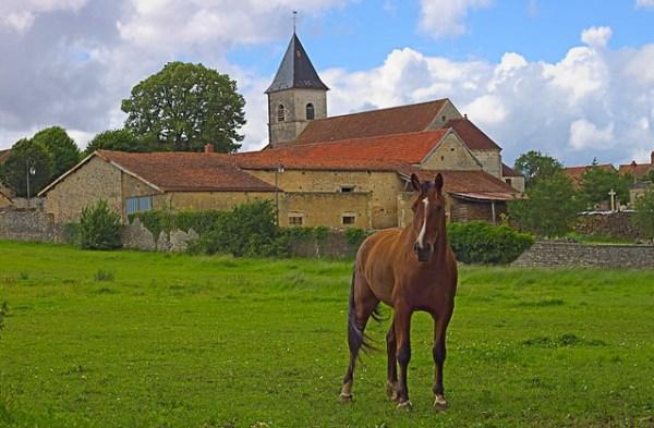 Cheval devant l'église de Puits (Côte d'or)