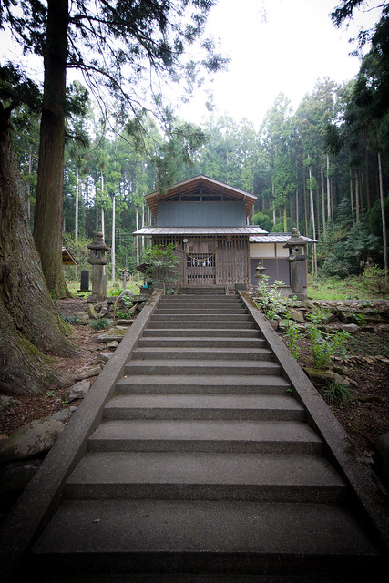 #25 The Giant Cryptomeria of Kumano Shrine