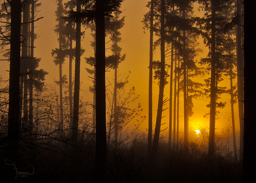 Sunrise at the forest edge