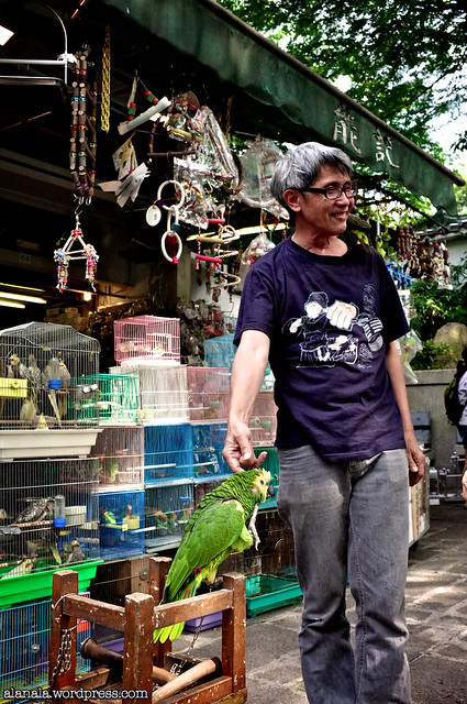 Parrots and his owner