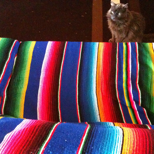 kitty and couch with mexican blanket