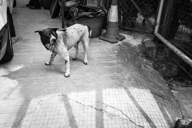 Dogs at the street 7