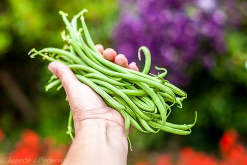 My First Green Beans