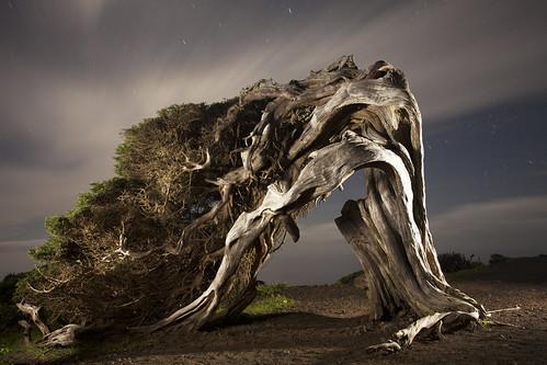 Artist:Jose Fernandez ,Glanzlichter der Naturfotografie 2012 by photokina - World of Imaging