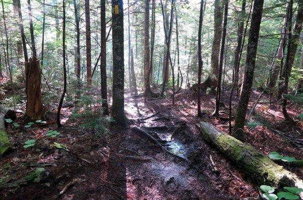 Signal Ridge Trail Beginning