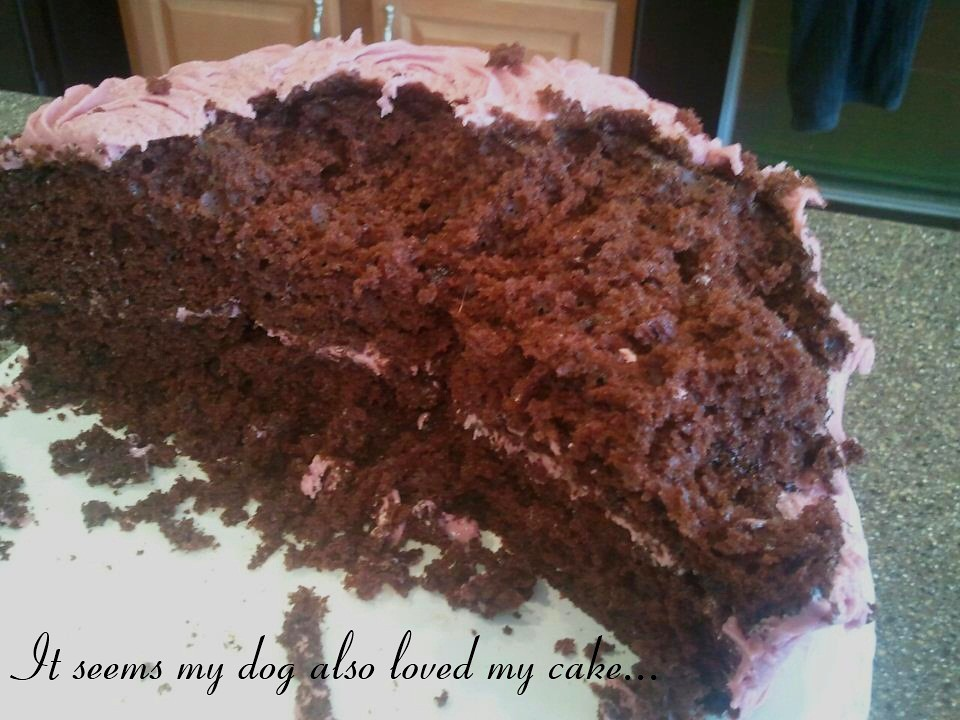 Dog ate cake