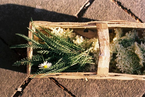 Foraged (Yarrow and Elderflower)