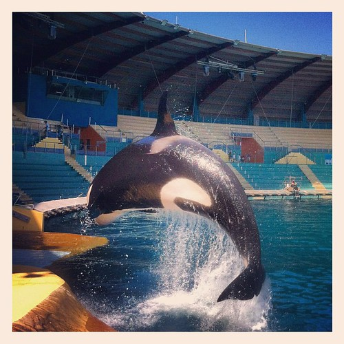#Killer whale, #Zoo, #Pinguin, we scout & will found and organize locations for all media by Team MaPiTo   Location scouts & Location managers