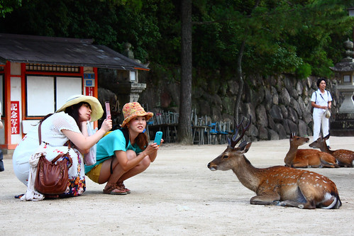 Deer & Japanese people - #2