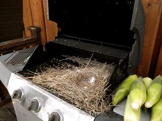 BBQ Bird Nest
