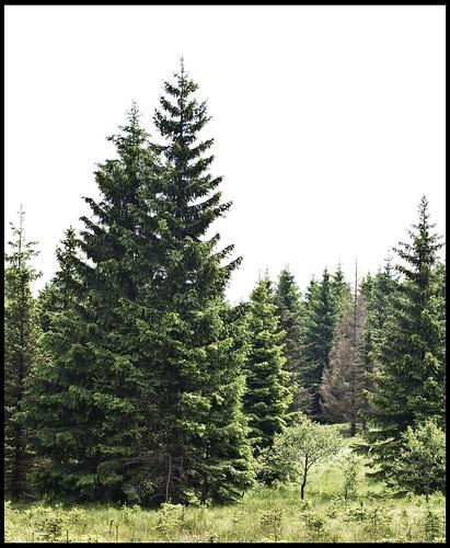 nachwachsender Wald