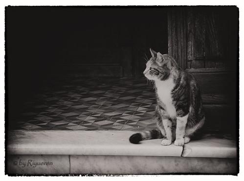 Gita a Seborga: i gatti del Principato