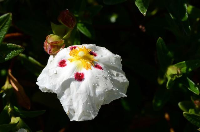 Flower + Raindrops