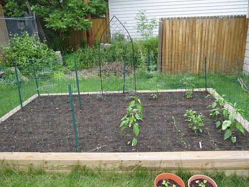 GardenWeek2 #1
