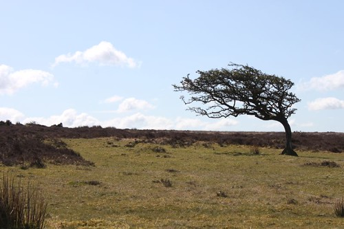 20120415_3887_Exmoor-tree