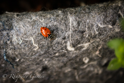 Ladybug on root pouch