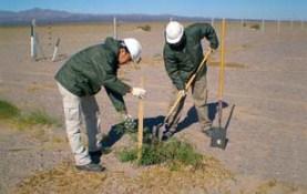 Forestación con algarrobos en Campo del Arenal