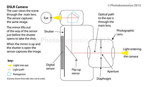 The essential components of a DSLR include the shutter