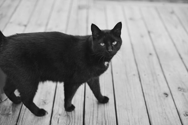 004_karen seifert cat richmond va