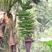 Mount Cameroon climb impressions, day 3 - IMG_2517_v1