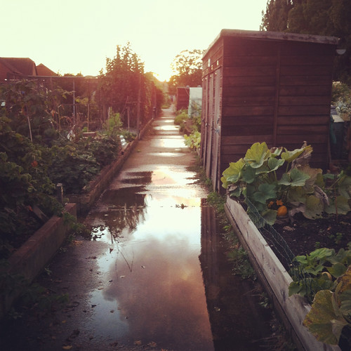 Allotment at sunset