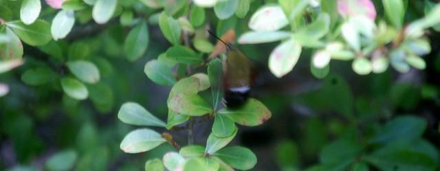 hummingbird (1280x498)