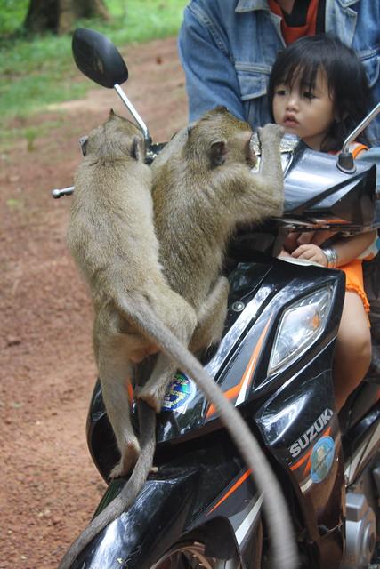 Angkor Monkeys and Motorbike