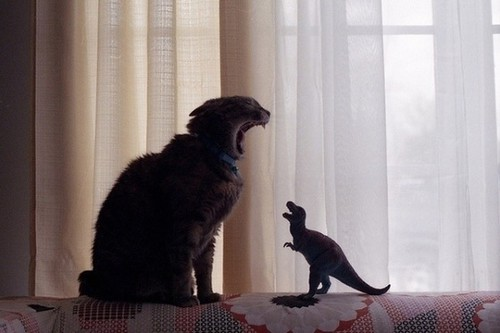 kittyrex