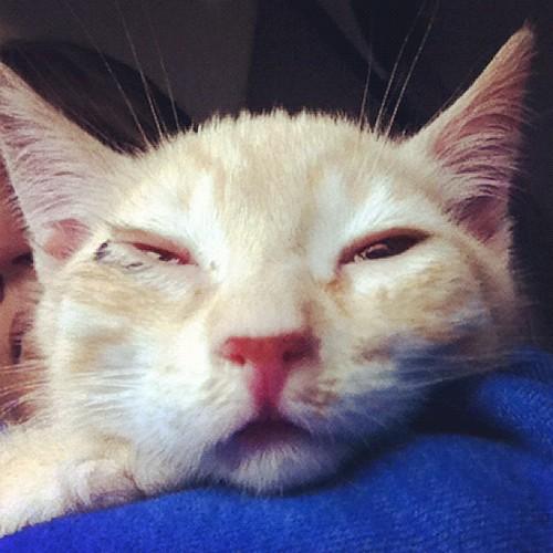 roadtrippin kitty