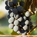 Harvest 2012 067