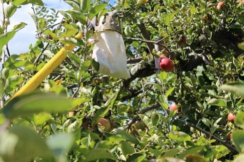 Wilkens Fruit & Fir Farm