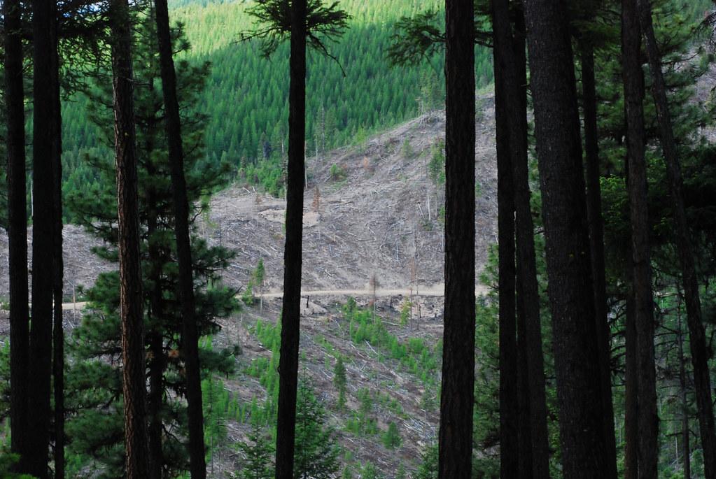 Todd Creek area