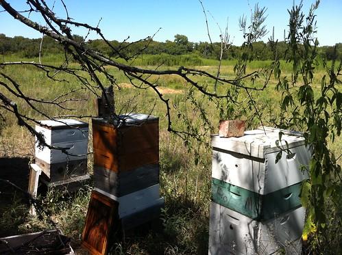 Farm 2012 hives 2