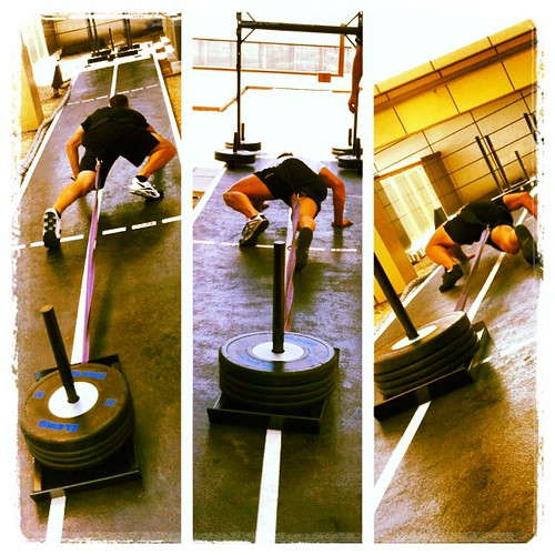 Who's who in the zoo?#training #sled #sledpull #evolve #innerfight #workout #gym #strength