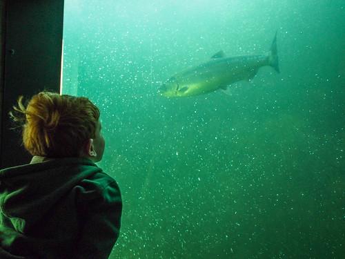 Patrick Sees a Salmon