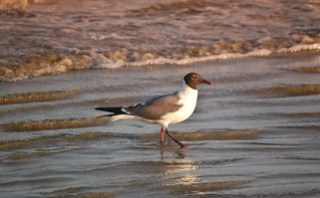 Seeking some food