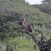 Etosha National Park impressions, Namibia - IMG_3282_CR2_v1