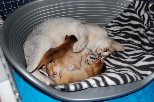 Sunny+kittens