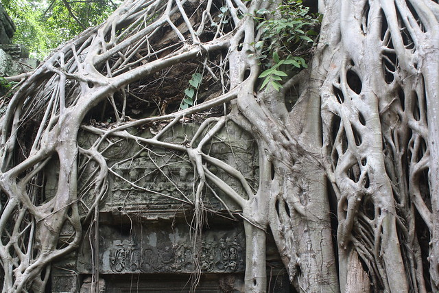 Ta Prohm: The Tree Temples in Angkor