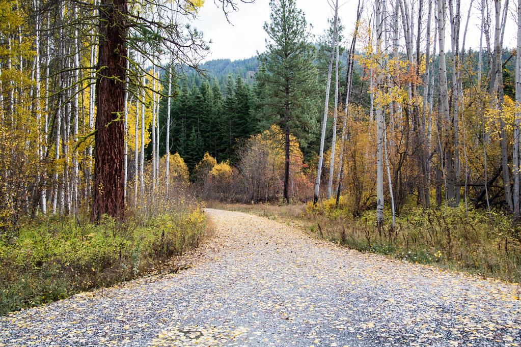 driveway into autumn