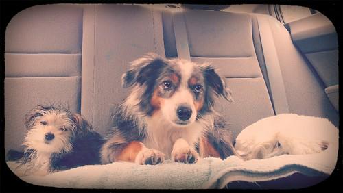 284/365 - October 10, 2012 - Car ride