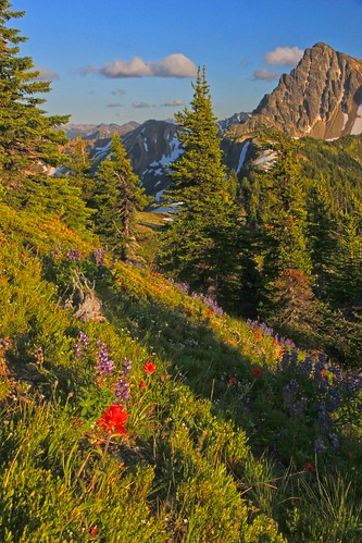 Wildflowers along the trail to Lakeview Ridge, Pasayten Wilderness by i8seattle