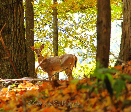 """""""As the deer pants for streams of water, so my soul pants for you, my God.""""  Psalm 42:1 by Child of the King Photography"""