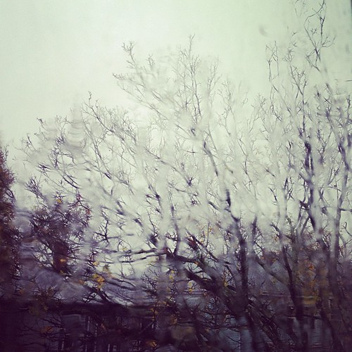 Patterns of rain and a now-leafless tree