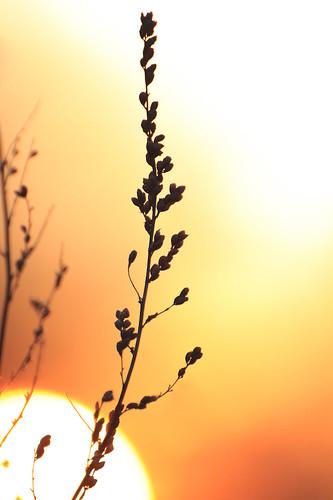 sunlight 3