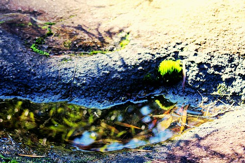 IMG 2013  In a Puddle by Eminpee Fotography