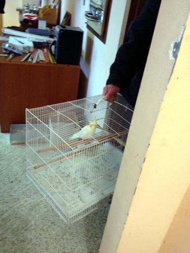 Man with caged pet bird