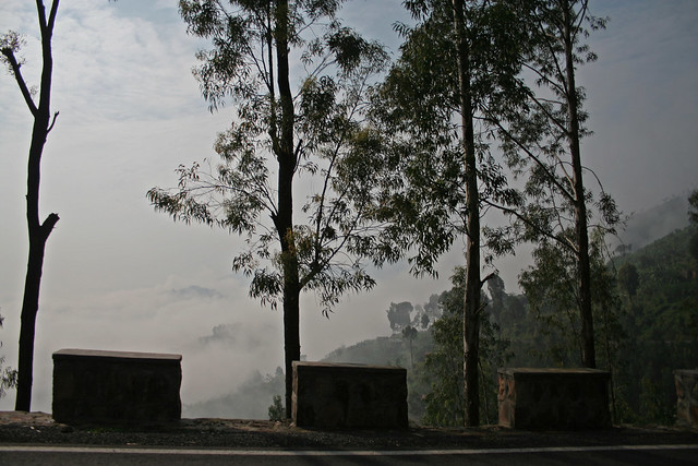trees and hills in the fog