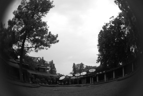 DSC_0446