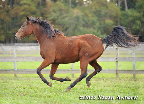 Hong Kong Express at Second Call Thoroughbred Adoption and Placement
